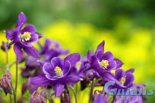 Flores Naturais em Brasil