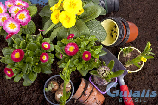 Flores e Plantas em Brasil