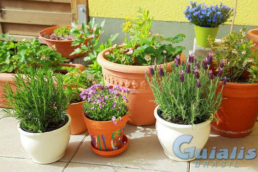 Plantas em Brasil
